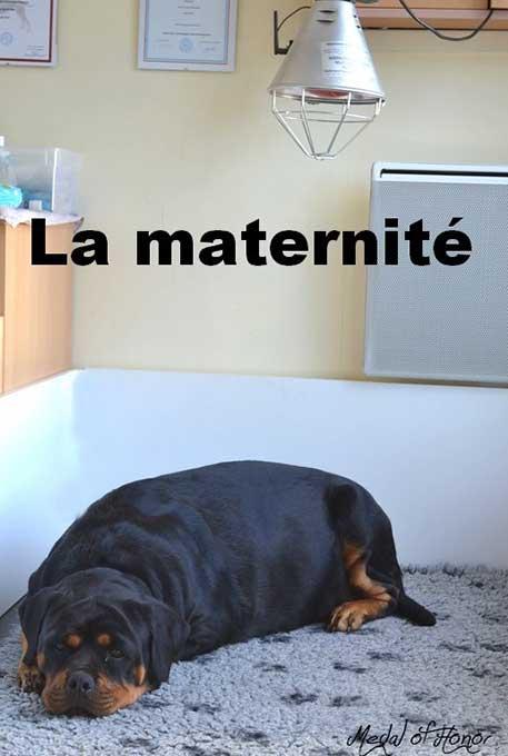 Ma maternité